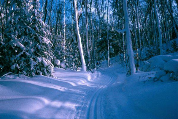blueberry ridge trail